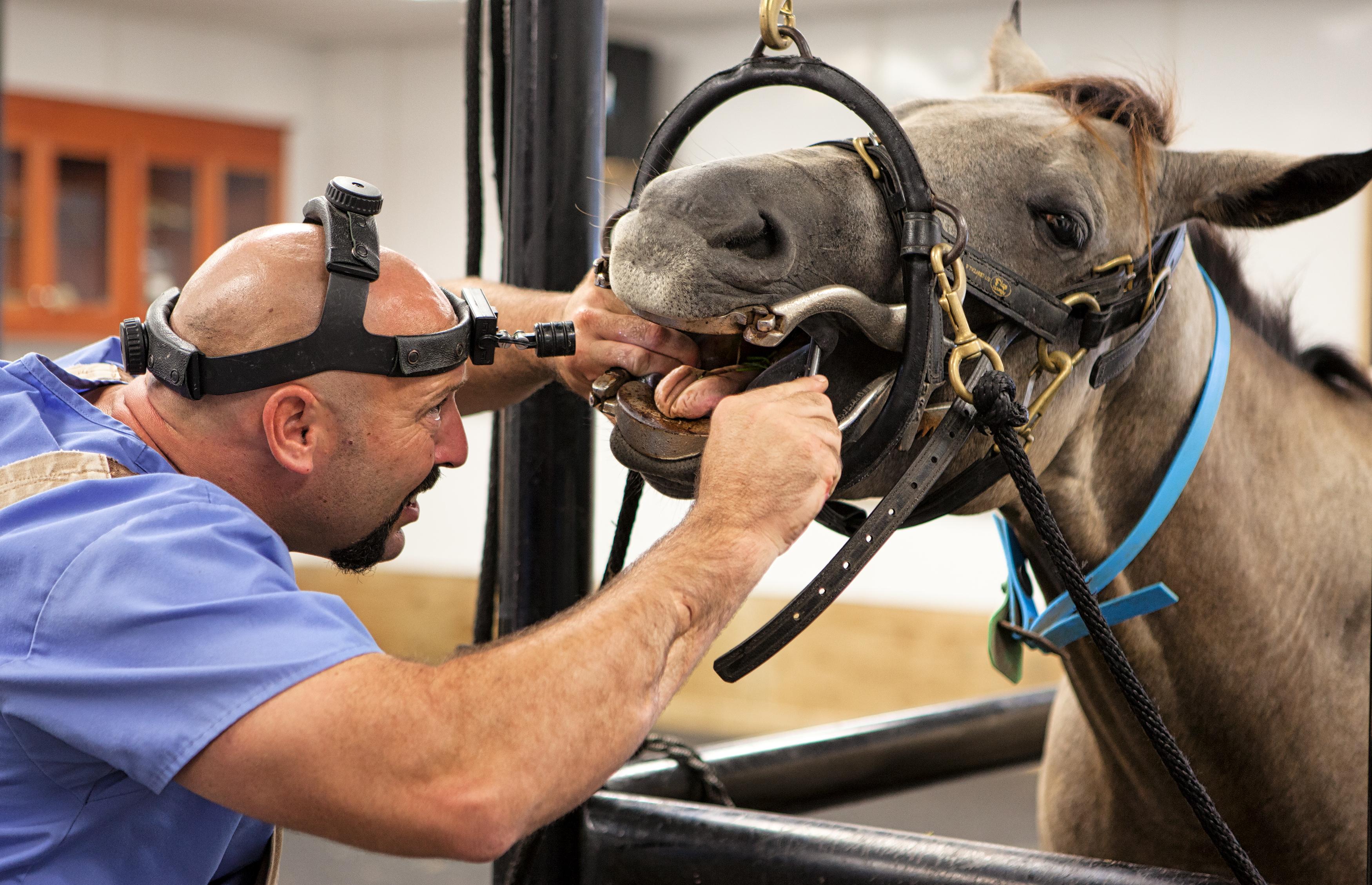 Large Animal Services   Veterinarian in Atmore, AL   Lee